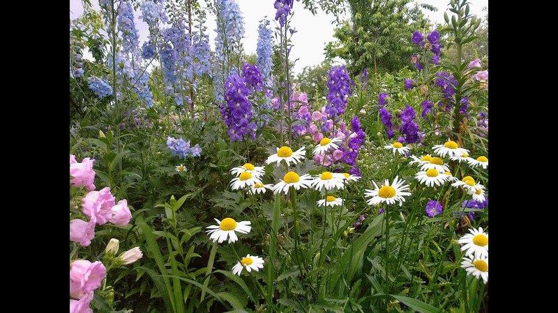 Мои цветные сны. Релакс. Flowers and music for the soul.