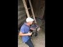Дойка козы Качери 🐐