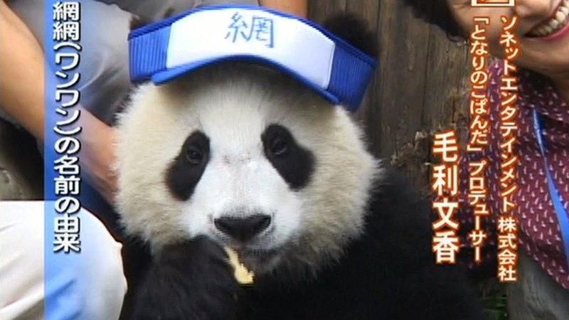 2005 Wolong Panda Cubs...Would I hug Kopanda Panda next?