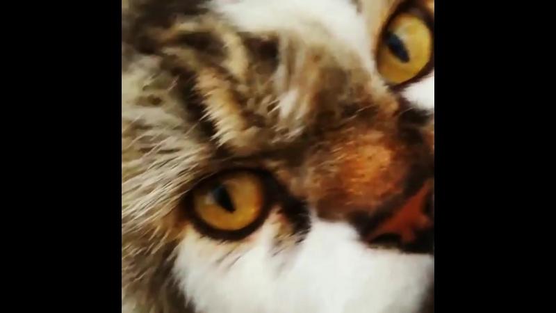 Неудачное интервью у кота