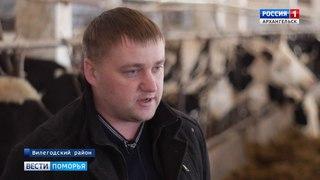 Свежее молоко от северных фермеров стало ненужным местным заводам