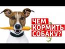 ЧЕМ КОРМИТЬ СОБАКУ ? Правильные витамины для собак (Советы ветеринара)