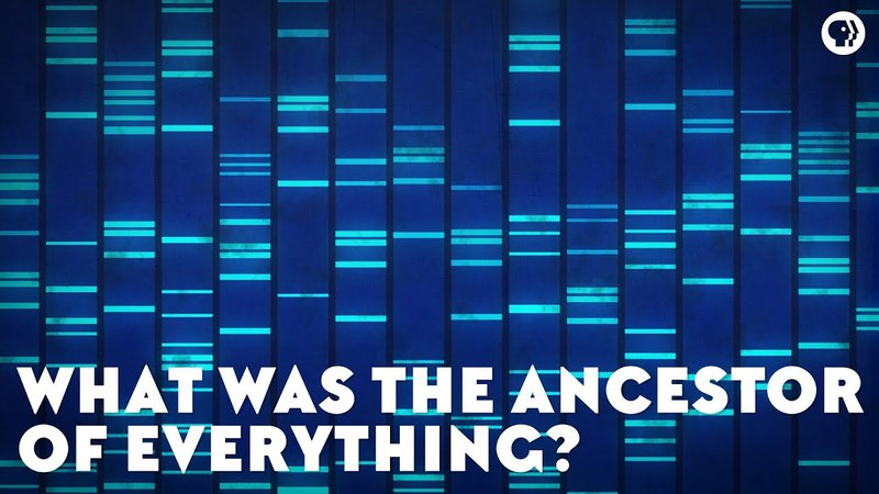 What Was the Ancestor of Everything (feat. PBS Space Time and It's Okay To Be Smart)