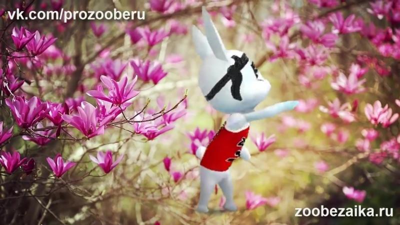 Шикарное поздравление с днем рождения женщине девушке! Красивые поздравления ZOOBE Муз Зайка_(VIDEOMON.RU).mp4