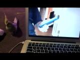 Реакция попугая на ролик, где он напевает рингтон iPhone