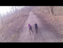 Kimo og Laika
