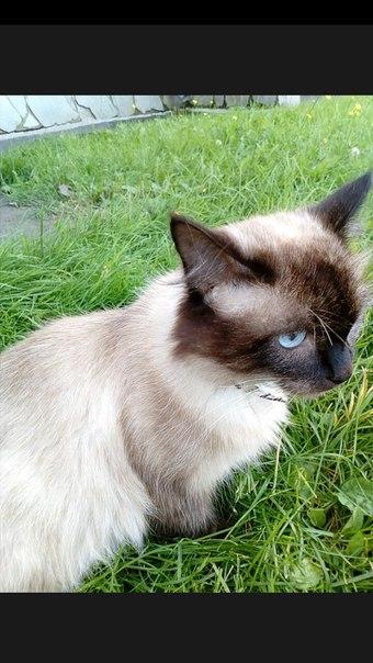 Потерялся котик в районе 10 школы , отзывается на кличку Лёва . Голубы