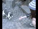 Любовь и преданность котейки =)