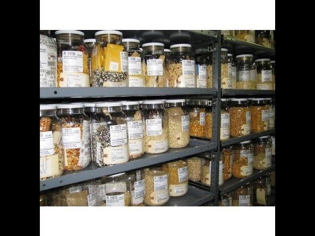 Разграбление и Передача Сероводородным Национального Банка Семян Вавилова! Замена Еды ГМО Отравой!
