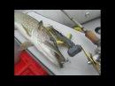Налим-виброхвост. Ловля щуки на свимбейт Savage Gear 3D Burbot