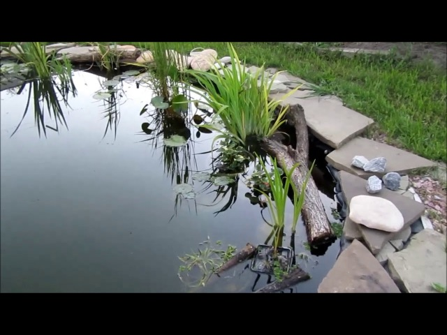 Плёночный пруд в моём саду. 2 часть. Искусственный водоём своими руками