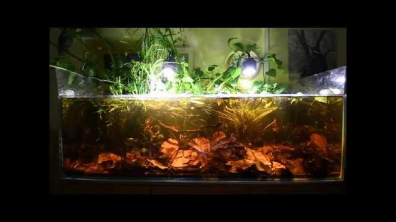 Blackwater Aquarium - Asian biotope