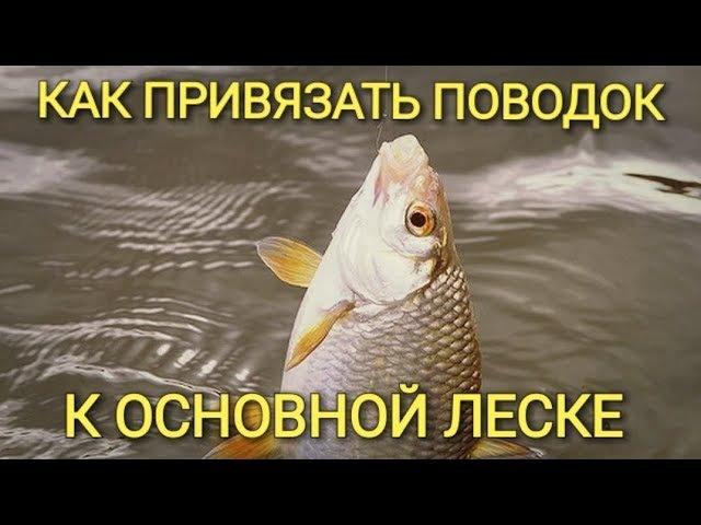 Рыбалка.Как привязать поводок к основной леске.Простой способ