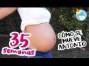 Cómo Se Mueve Antonio 35 Semanas de Embarazo miembarazomolon