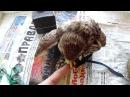 Дикий птенец слёток сокола Пустельги Wild Kestrel chick