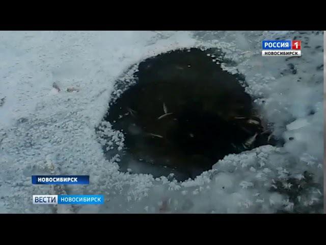 Гибнущую в Новосибирском водохранилище рыбу перевезут в Обь