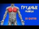 ГРУДНЫЕ МЫШЦЫ 10 ФАКТОВ Биомеханика Тренировки Анатомия