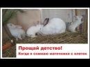 Прощай детство Когда я снимаю маточники с кроличьих клеток