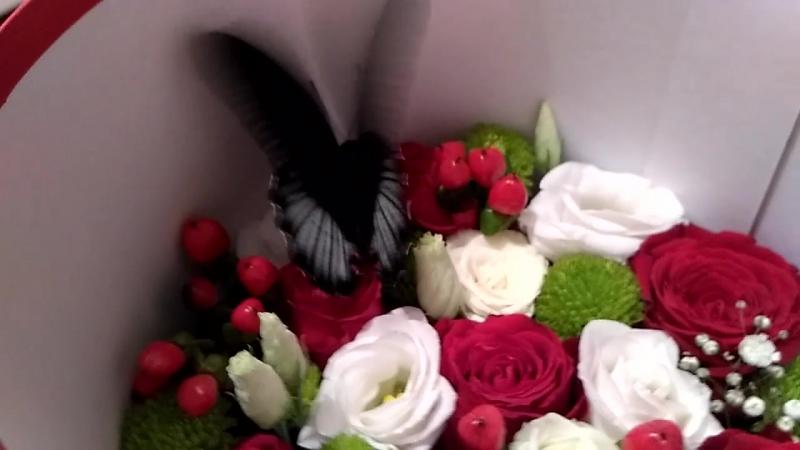 Бабочка Парусник Румянцева (Барселона) в коробочке с цветами (домике для бабочки)
