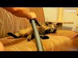 Котики и пылесосы