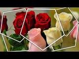 Розы без шипов.....Небо на двоих