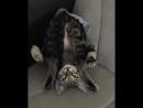 Котик из Икеи собрали без инструкции