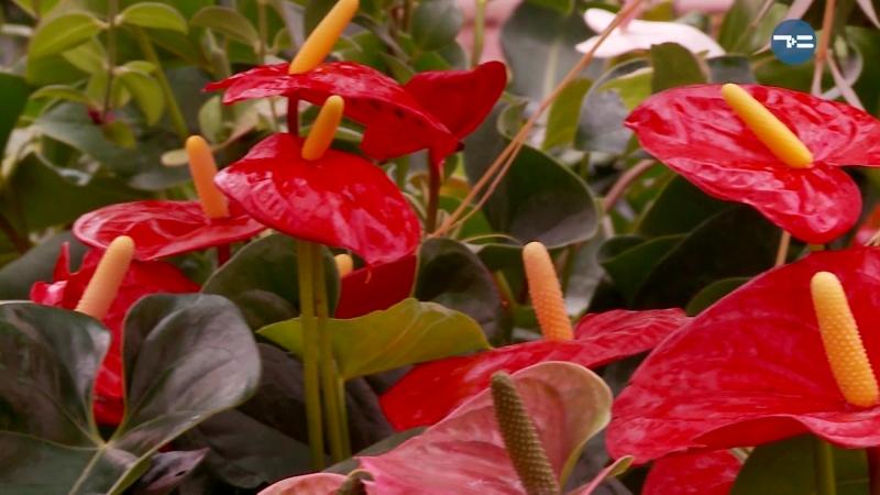 Здесь выращивают миллионы растений!