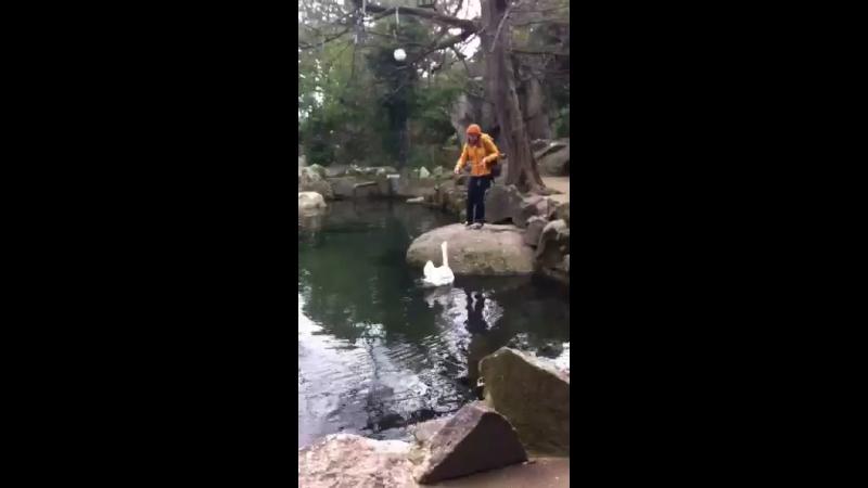 Воронцовский дворец пруд с лебедями
