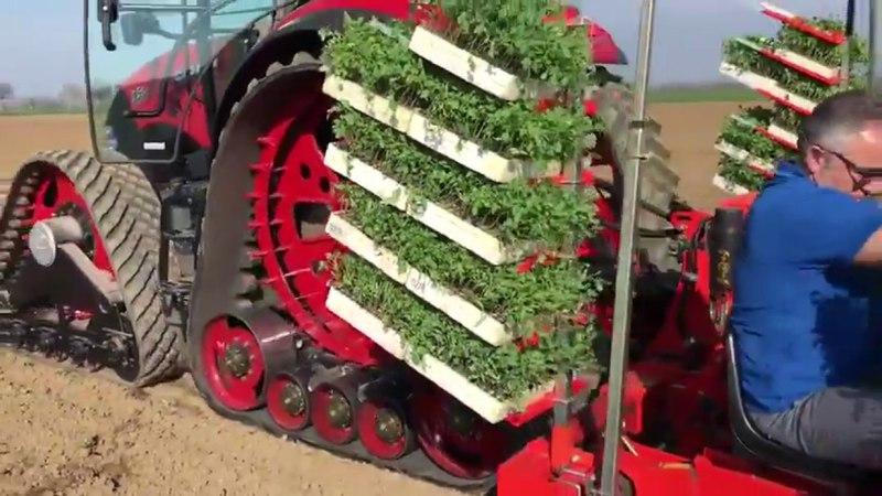 Трактор с гусходом Poluzzi на высадке томатов