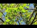Стучит по дереву дятел прямо надо мной на ветке Не боится жить в городе Это Нидерланды