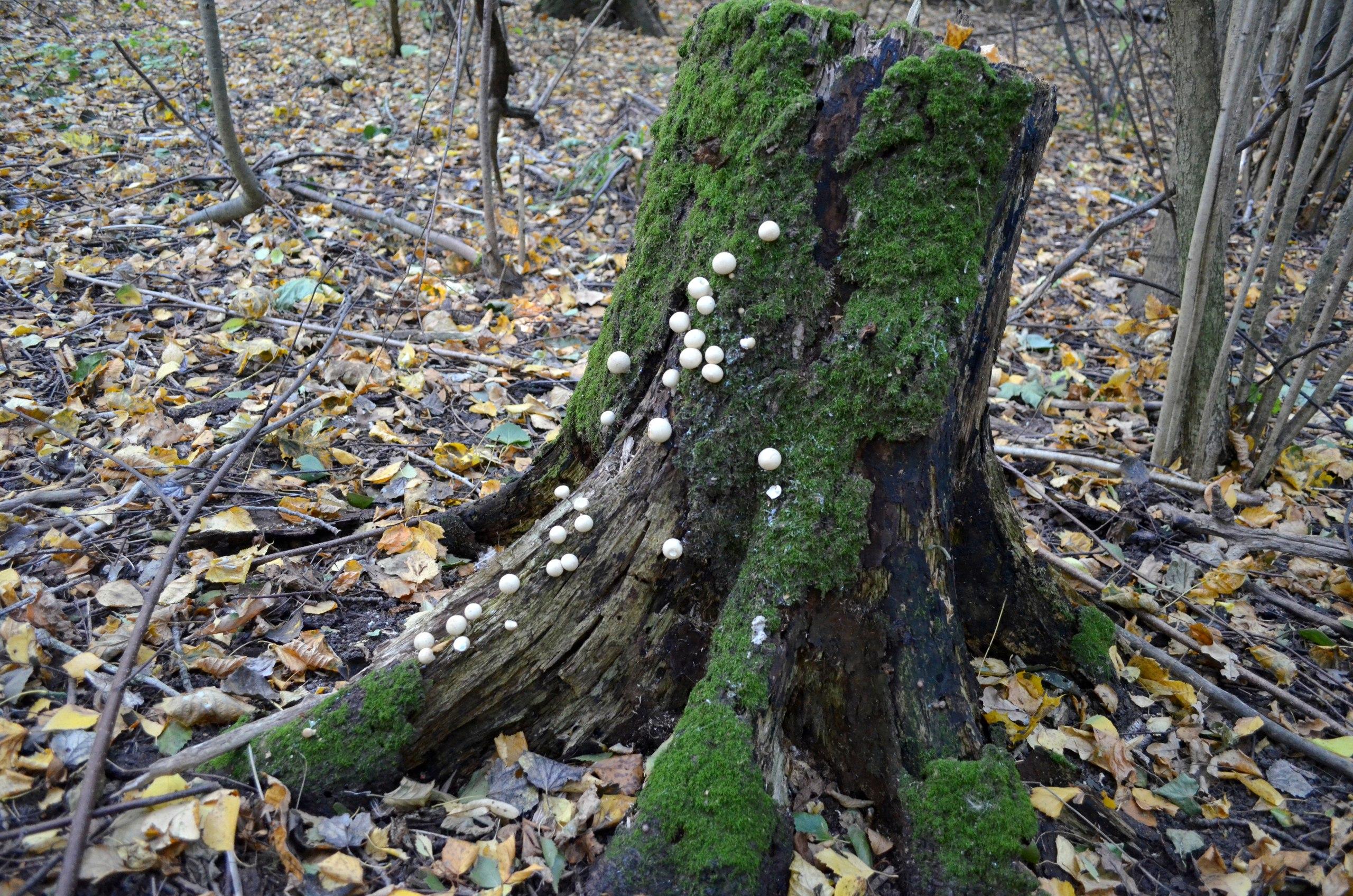 грибы в удомельском районе