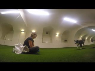 Tromplo  agnieszka janarek dog trainer, backing