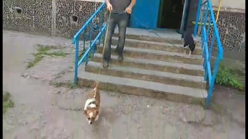 Выход на прогулку с Пальмой, Джоей и Жулей » Freewka.com - Смотреть онлайн в хорощем качестве