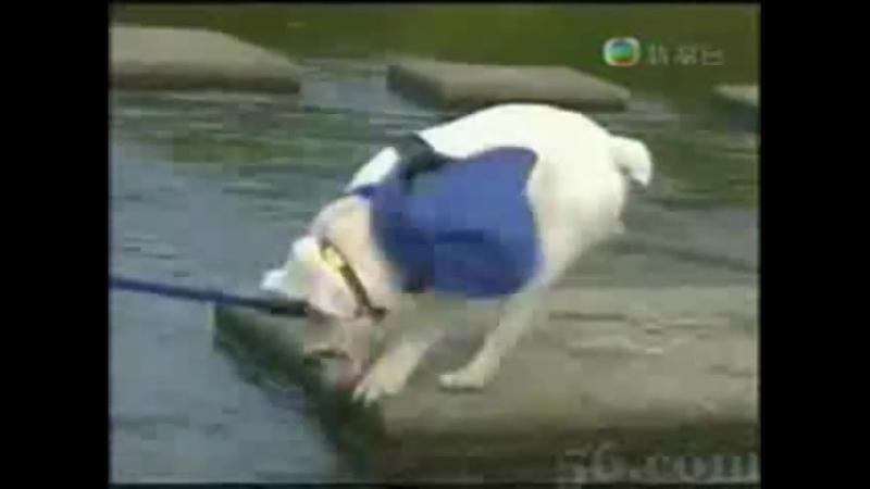 Aap leid hond over water