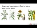 16 Цветковые растения их строение разнообразие и значение