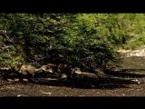 BBC Прогулки с динозаврами - Гибель династии (BBC Walking with Dinosaurs - Death of a Dynasty)(1999)
