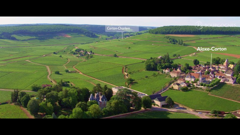The vineyard of Bourgogne seen from the sky