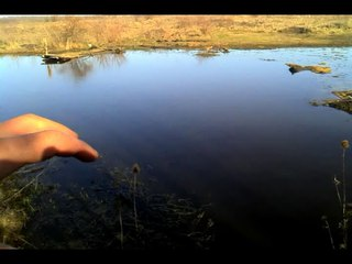 Это важно! Мой пруд для разведение раков и рыбы, выращивание корма для мальков!