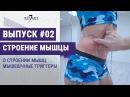 Выпуск 02. Что такое мышца Триггеры и как от них избавиться.