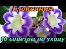 ГЛОКСИНИЯ Уход в домашних условиях Выращивание и размножение 10 ПОЛЕЗНЫХ СОВЕТОВ
