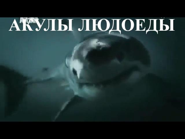 Animal Planet - Акулы Людоеды. Почему Нападают Акулы? Документальный Фильм