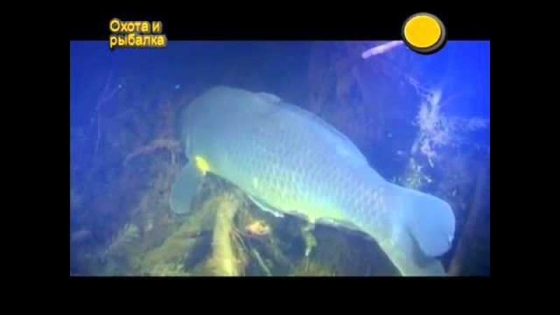 Что делает рыба осенью и зимой Водный мир