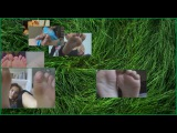 EROTICA HYPNOTICA - Footsie