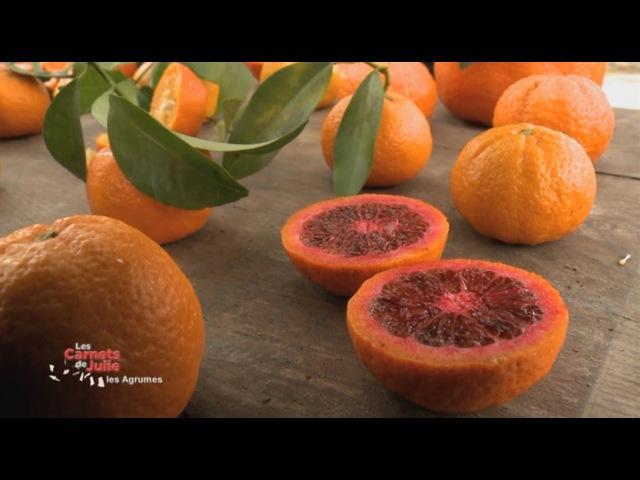 Les saveurs des agrumes - Les Carnets de Julie