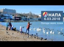 Анапа Погода 6 03 2018 Тепло и солнечно Море центральный пляж лебеди