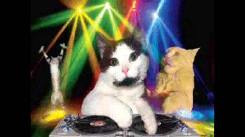 Dj89 - Beber Dj cat le chat trance