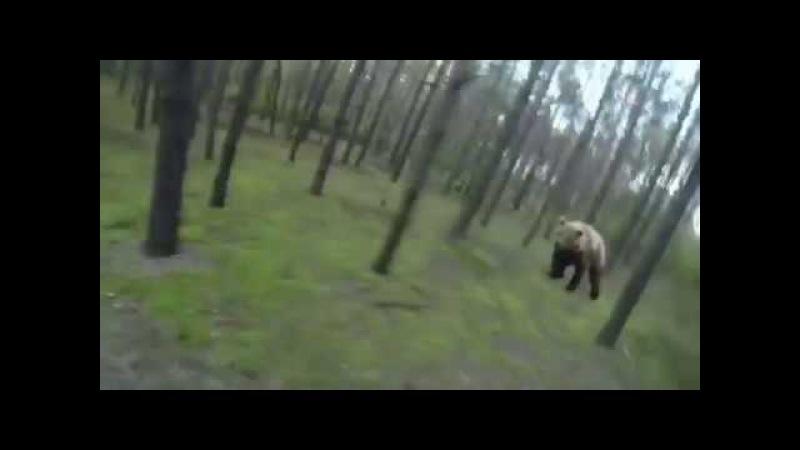 Эту страну не победить. Русский гонится за медведем