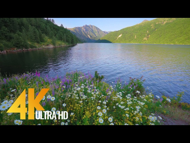 Static Nature Scene of the Coldwater Lake Shores in 4K with Soothing Bird Singing - 1 Hour