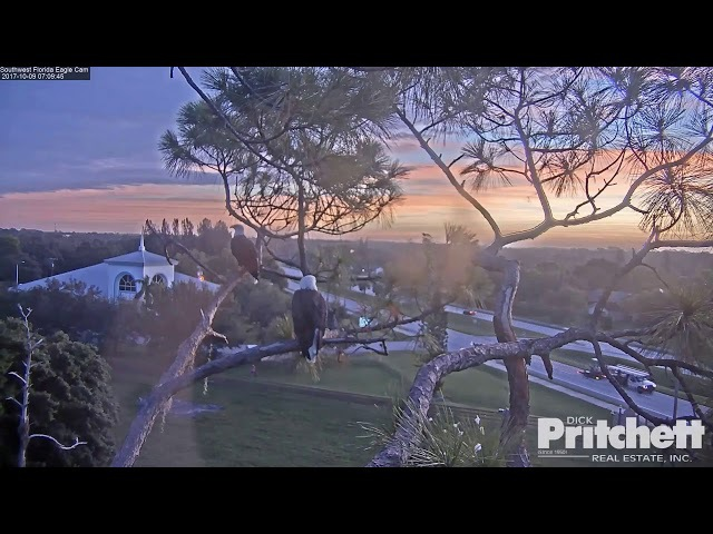 SWFL Eagles ~ Sunrise Bonding, Side Kicks Preening 10.9.17