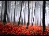 Twin Peaks -Falling (Julee Cruise)